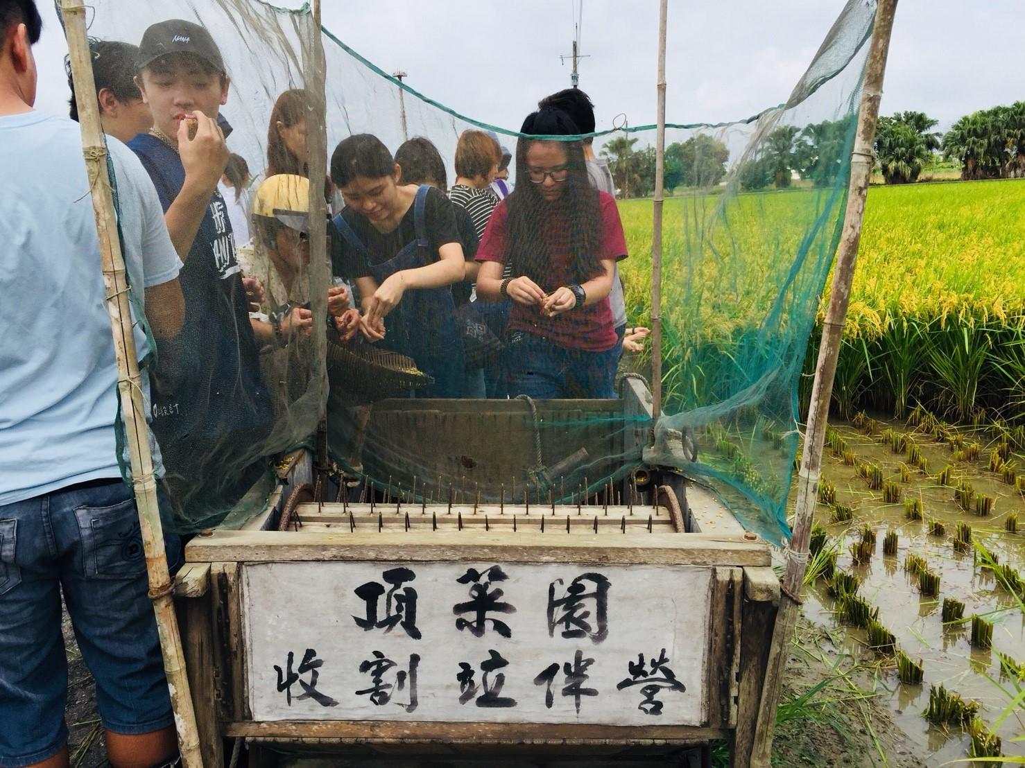 社區生力軍-嘉南藥理科技大學實習生進駐頂菜園社區,一同與社區長輩體驗稻米收割趣,並將陪伴社區一同成長。(107.07.03)