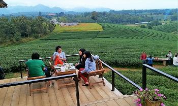 由華裔同胞經營的翠峰觀光茶園,結合茶飲、民宿等多角化經營,再創商機。
